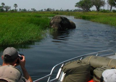 Elephant seen from Roger Dugmore Safaris' boat