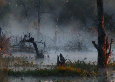 Early morning game drive Roger Dugmore Safaris