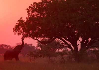 Elephant at sunset Roger Dugmore Safaris