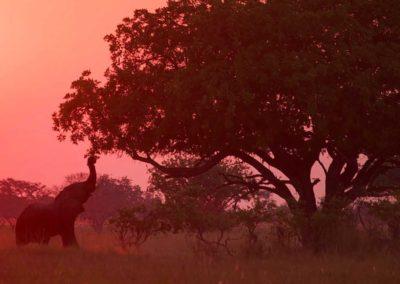 Elephant at sunset Roger Dugmore Safaris